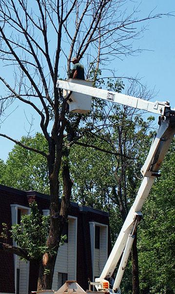 Tree Services Columbus Ohio